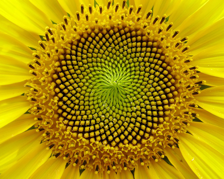 Perfect-Geometric-Patterns-In-Nature9__880
